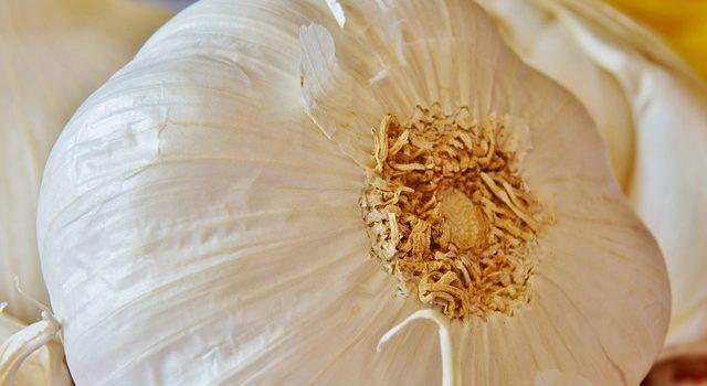 ニンニクの芽を取り除く理由