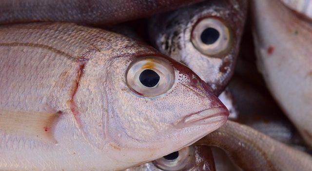 魚を煮るとき、汁を煮たてる理由