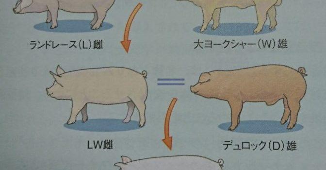 三元豚とは