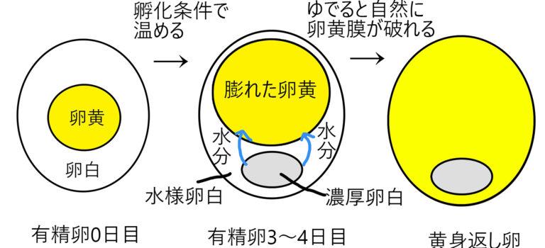 黄身返し卵②